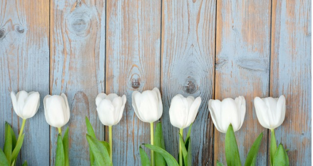 tulips, tinfoil and teaching