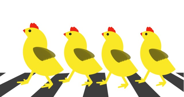 Scaffolding: How the Chicken Who Crossed the Road Developed New Knowledge