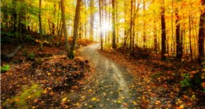 Nature trail for students to walk on during fall