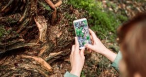 Student holds up phone to identify outdoor plant